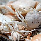 Crabs no More by Rebecca Eldridge