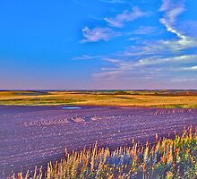 The Prairies by David Davies