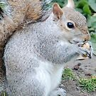 I'm nuts about nuts! by Rebecca Eldridge