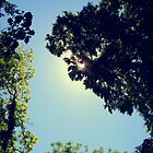 Through the Canopy by Lucy Hale