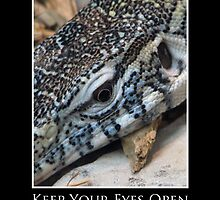 ZooTips: Keep Your Eyes Open by Angie Dixon