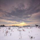 Snow Field by Andrew Leighton