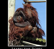 ZooTips: Learn the Ropes by Angie Dixon