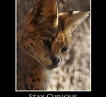 ZooTips: Stay Curious by Angie Dixon