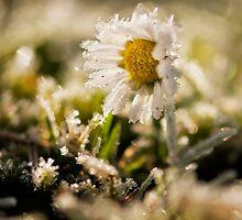 A Frozen Memory by Marco Heisler