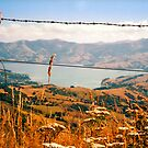 Looking down on Akaroa by apple88