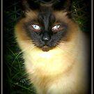 Zeus Cat by AngieBanta