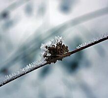 Iced Branch by Julesrules