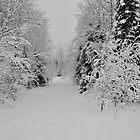 Untouched Path by John Callan