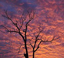 6th of December 2010 ~ Dawn in Western Australia by Coralie Plozza