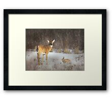 Feed the Animals Framed Print
