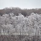 Frosty Trees by Jill Vadala