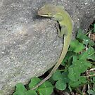 Native Anolis Carolinensis-Near Clover  by JeffeeArt4u
