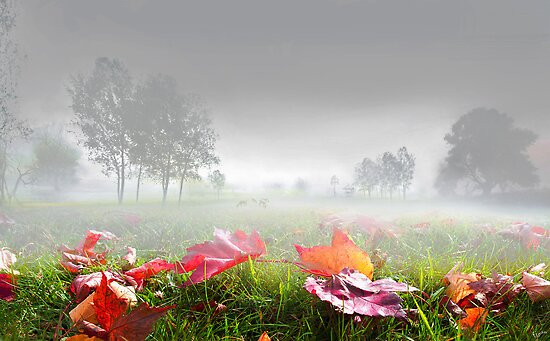 Foggy Morning by Igor Zenin