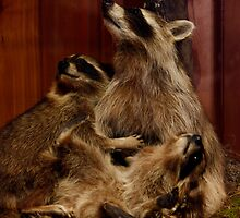 Racoon Family by by M LaCroix