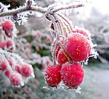 Iced Fruit by David Bradbury