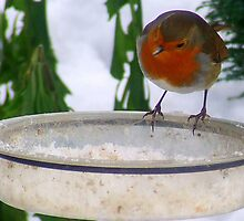"""""""Who Ate All The Food?"""" by Chris Goodwin"""