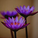 Three Lilies by Indrani Ghose