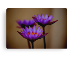 Three Lilies Canvas Print