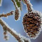 Frozen in Pine by Mark Lyons