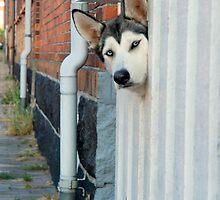 Waiting for Mailman by Maya Hiort Petersen