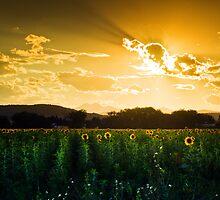 Longmont Summer Skies 2 by John  De Bord Photography