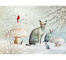 The Winter Cats Photographic Print