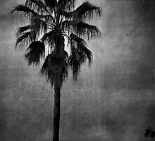 Palm Silhoutte by garts