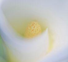Inside of a Flower by Ryan Carter