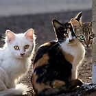 The Three Little Kittens by Sue  Cullumber