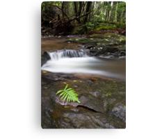 Rainforest Solitude Canvas Print