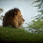 King by Paul Louis Villani