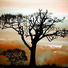 Tree in Silhouette by Philip Bateman