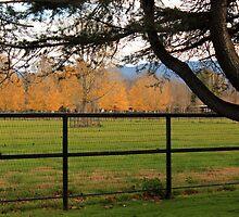 Golden Trees by Renee D. Miranda