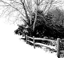 Snow Fence by Karen Martin IPA