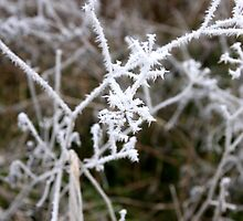 Forest tree branches blanketed with frost  by Chris L Smith