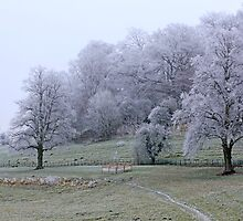 Dorset landscape blanketed with fog and frost  by Chris L Smith