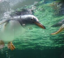 Mr Penguin by kimathy