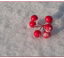 Red Berries in the Snow by Kelvin  Taylor