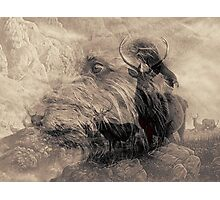 hunter and the hunted Photographic Print