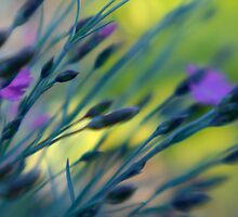 Spring Dream by kimmac