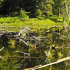 Pond Life Pano by Les Wazny