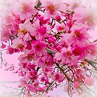 Cherry Blossom Sky! by Diane Schuster