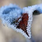 Mother Nature's Frosty Tongue. by bared