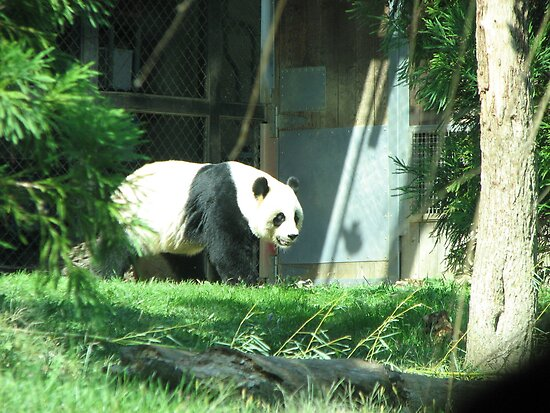 Panda Bear by iagomega
