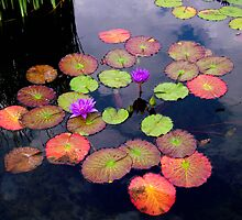 Colorful Lilly Pads by lustevenson
