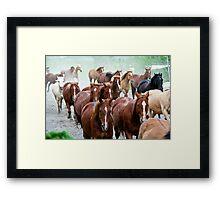 Part of the herd Framed Print