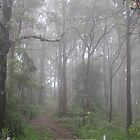 Mist in the Aussie Bush by aussiebushstick