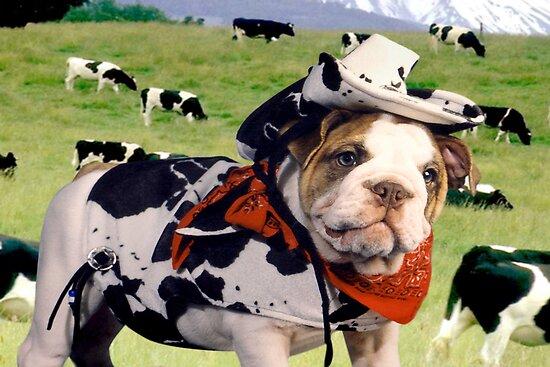 """Cow Dog"" - An English Bulldog wants to be a Cow Dog. by John Hartung"