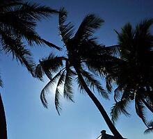 Coconut Shelter by Hiran Maddumage